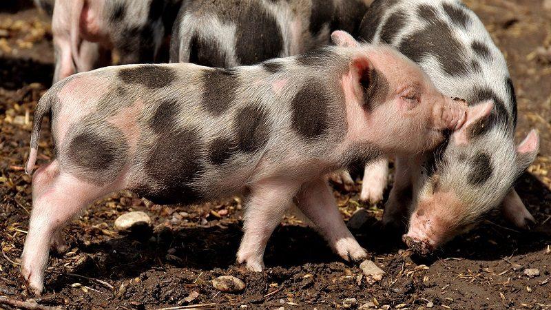 L214 : justice pour l'espèce animale
