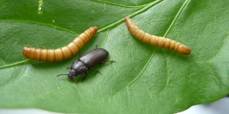 Farine de scarabées, Satoshi et le prix Nobel d'économie… L'actu biz du mardi 10 novembre