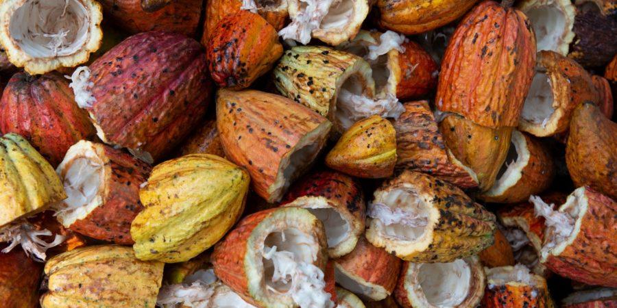 Cacao: Le Ghana et la Côte d'Ivoire suspendent leurs ventes pour obtenir une revalorisation des prix
